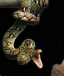 Ecouter une histoire - le serpent dans le Paradie Terreste