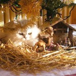 histoire d'animaux - chat dans une crèche