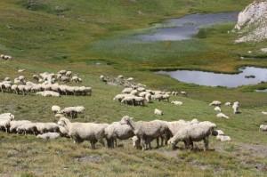 Catéchèse pour les enfants - troupeau de moutons - Songe de Don Bosco