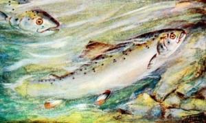 saumon dans la rivière - histoire pour illustre l'appel de la vocation