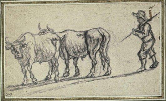 Pierre mène ses deux vaches au pré