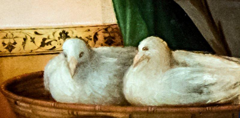 2 colombes offerte pour la Présentation Jesus au Temple - Histoire pour les petits